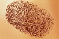 SIA Licence Hub - Gold Fingerprints